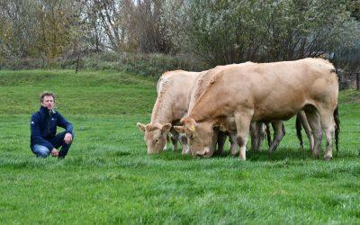 Passie voor blonde d'aquitaine koeien