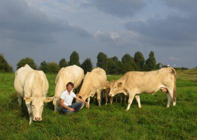 Marcel Gerritsen blonde d'aquitaine koeien